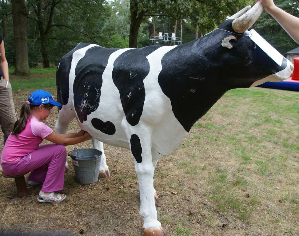 Koe melken bij Boerderij Sallandshoeve